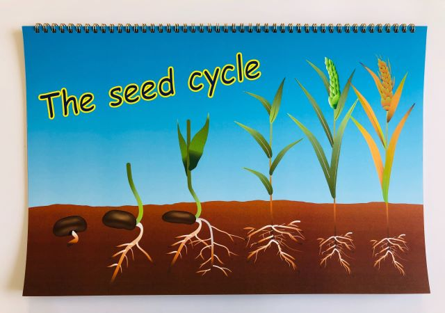 The seed cycle_a4