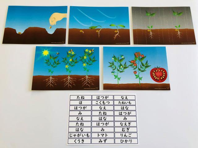 pic card_plants life cycle_A5_Japanese_laminated