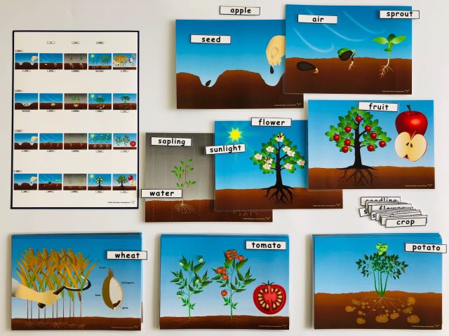 pic card_plants life cycle_A5_laminated