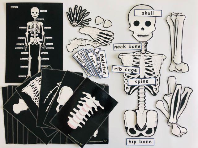 pic card_skeleton_A5_laminated
