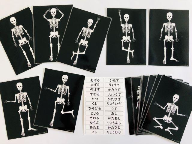 pic card_skeleton exercise_Japanese_laminated
