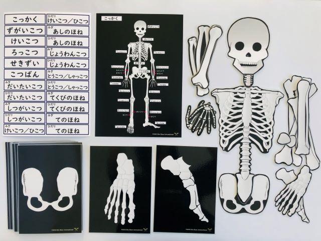 pic card_skeleton_A5_Japanese_laminated