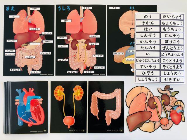 pic card_organs_A5_Japanese_laminated