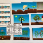 pic card_plants life cycle_A5_Japanese